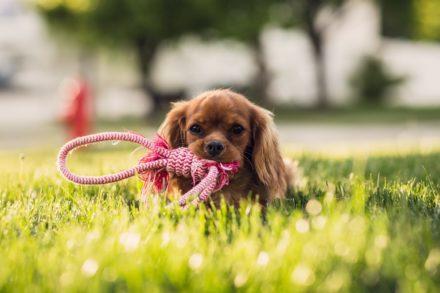 Dobry start dla szczeniaka cz.2 – ogólne zasady pracy ze szczeniakiem