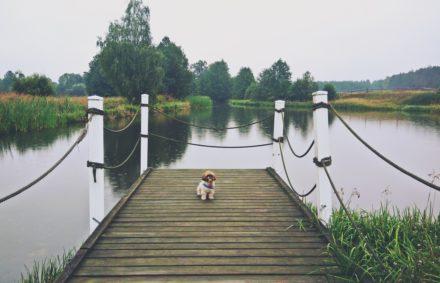 Klasy komunikacji dla psów z Talking Dogs