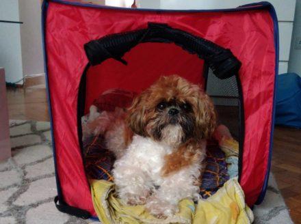 Sportpet Portable Dog Kennel – recenzja niskokosztowego namiotu dla psa