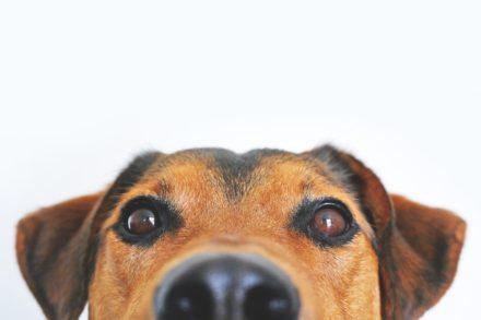 Psi uczeń – jak mu pomóc?