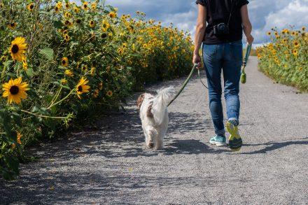 Spacerowe rozrywki, czyli jak powinien wyglądać psi spacer?