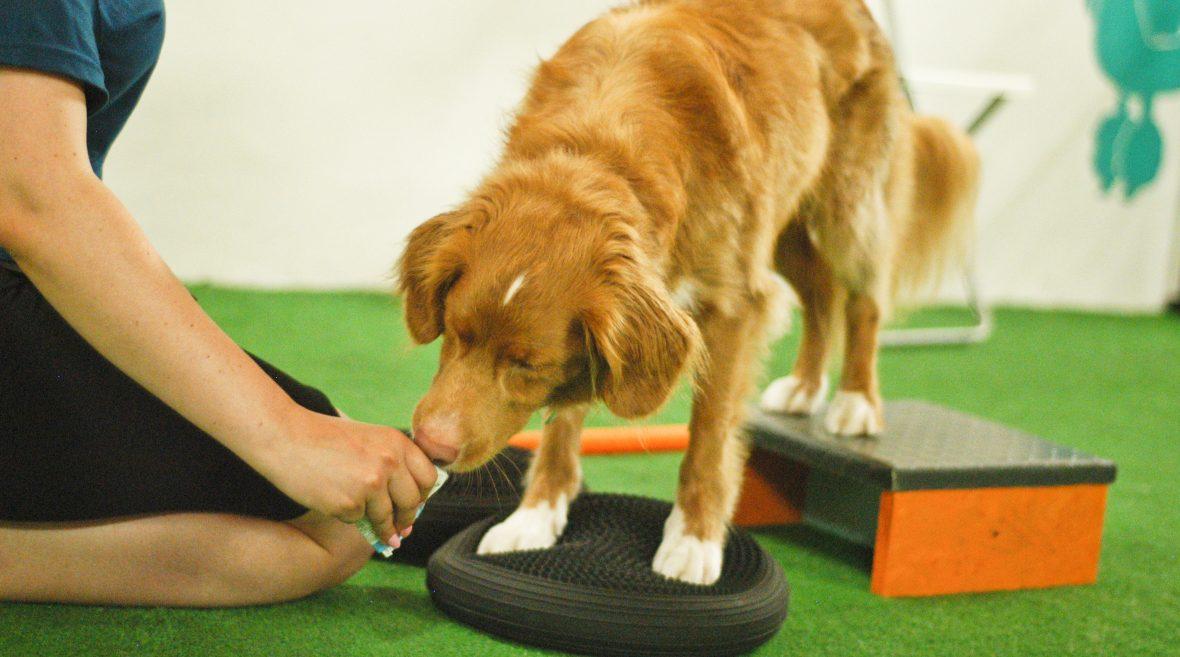 Psi fitness – z czym to się je?