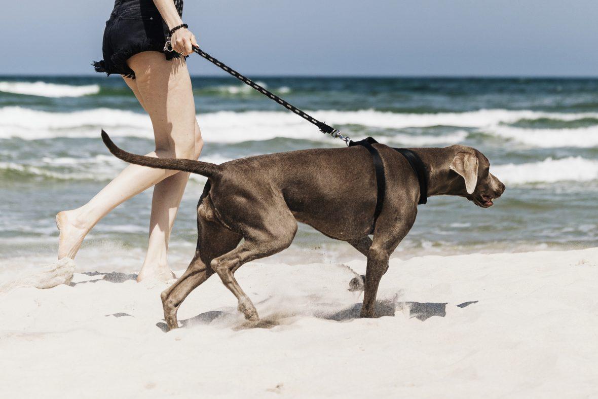 Wakacje z psem i z głową!